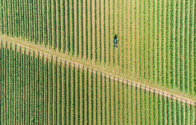 Panoramica di vigneto di azienda vinicola in Trentino Alto Adige